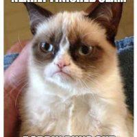 cat meme bobbin runs out